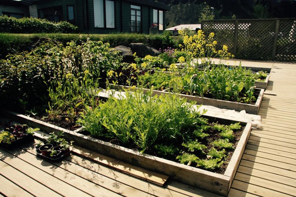 Garden design vegatables