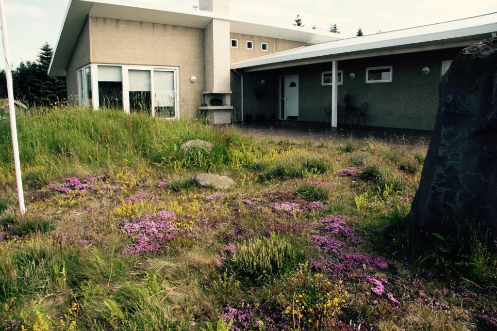Iceland wild flower garden design