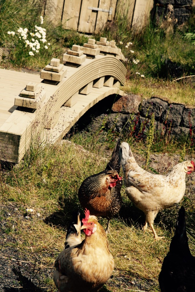 Landscape_design_chicken